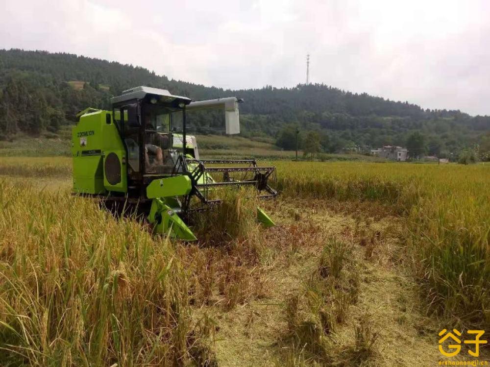 中联谷王PL50水稻收割机