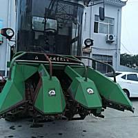 金大丰4YZP-3玉米收