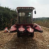 豪丰三行玉米收割机